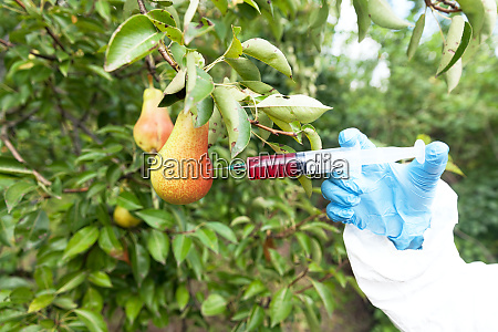 genetically modified fruit