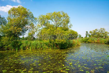 pond in a rural landscape