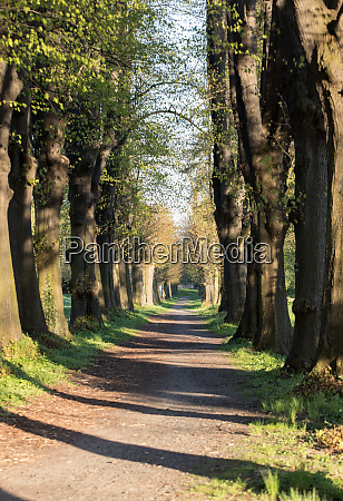 romantic and mysterious alley path with