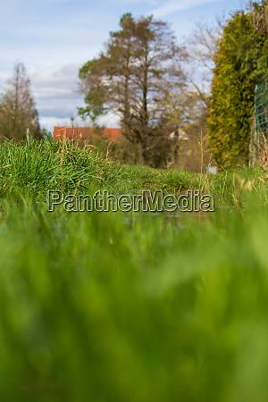 fresh spring tuft of grass left