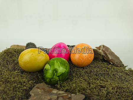 easter eggs on moss with neutral