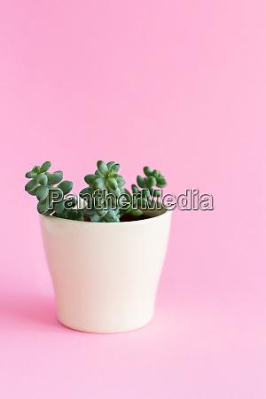 cream vase with a succulent plant