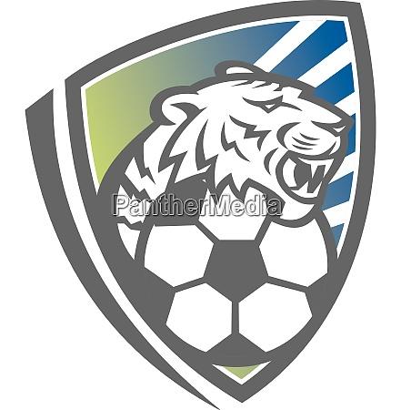 tiger head soccer ball shield mascot