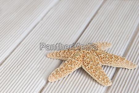 pretty starfish with copy space