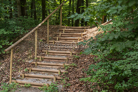 forest path with stairs