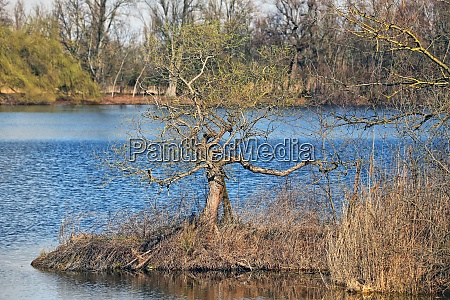 pasture on the lake shore