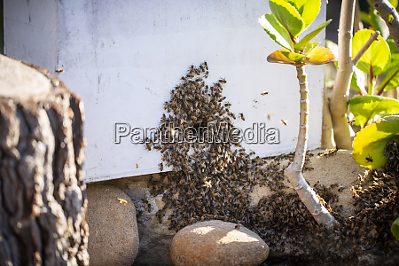 swarm of bees on plant
