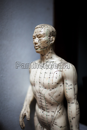 close up of male acupuncture dummy