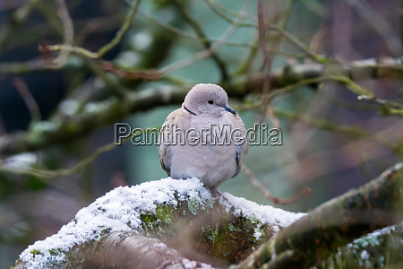 dove sitting on a tree with
