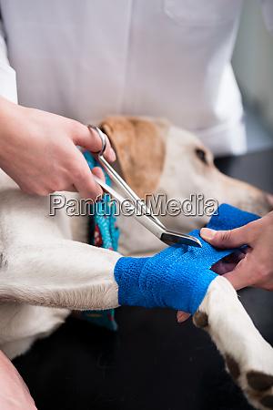 dog taking care of injured dog