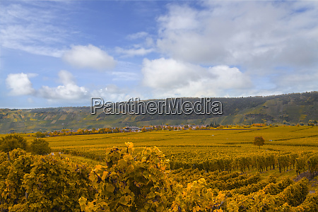wine landscape near cochem and leiwen