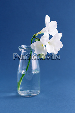 spring composition with a white freesia