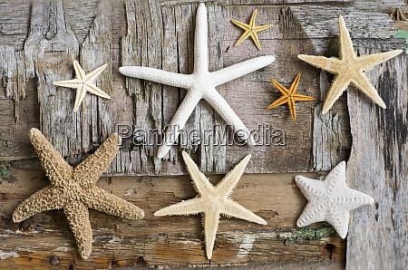 maritime still life with starfish
