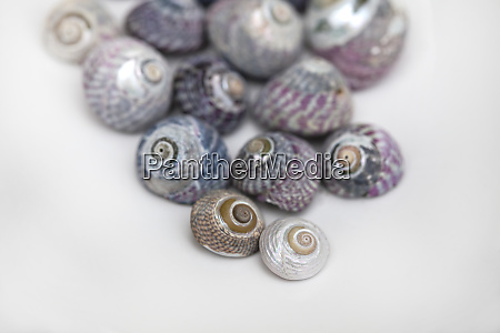collection of sea snail shells