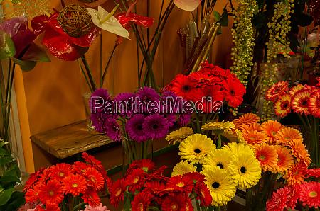 flower shop gerbera and anthurium
