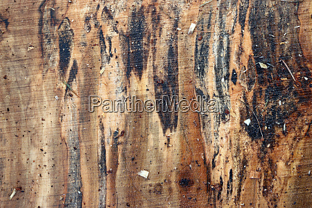 spalted maple tree sawn timber plank