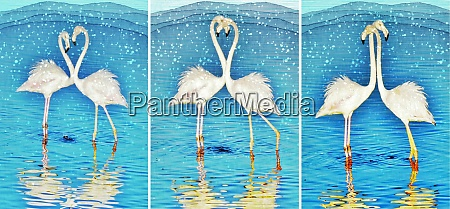 collage with two flamingos madly in