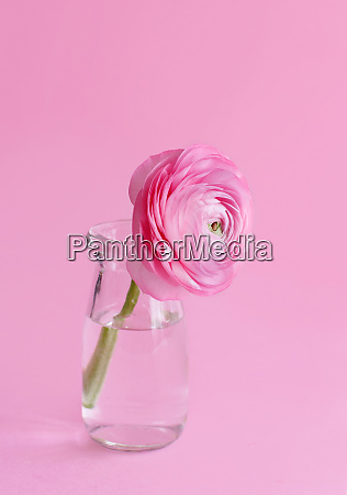 spring composition with a pink flower