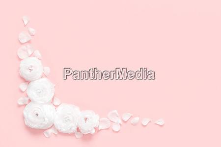 cream ranunculus flowers on a light