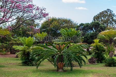 botanical, garden, monte - 28215457