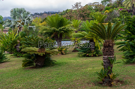 botanical, garden, monte - 28215459
