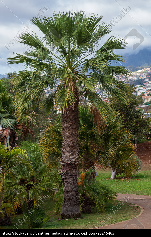 botanical, garden, monte - 28215463