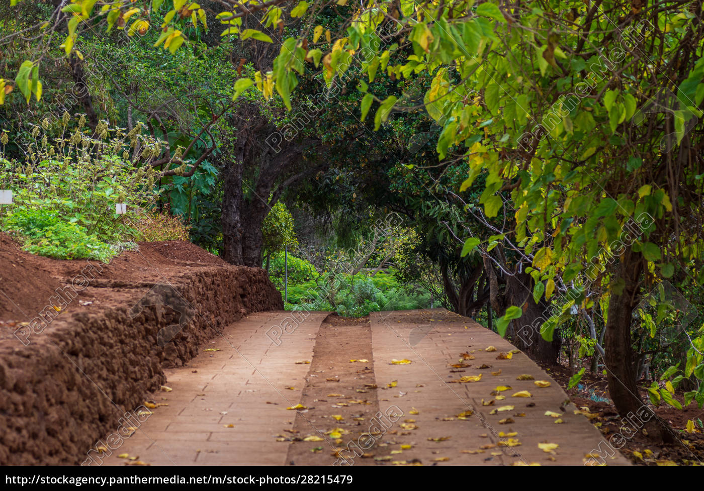footpath, in, the, botanical, garden - 28215479