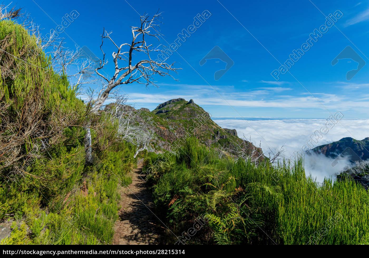 from, mountain, pico, arieiro, to, pico - 28215314