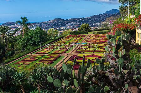 funchal, botanical, gardens - 28215414