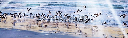 landscape, with, seagulls, on, the, beach - 28215152