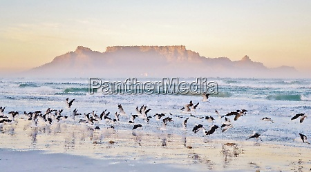 landscape, with, seagulls, on, the, beach - 28215156