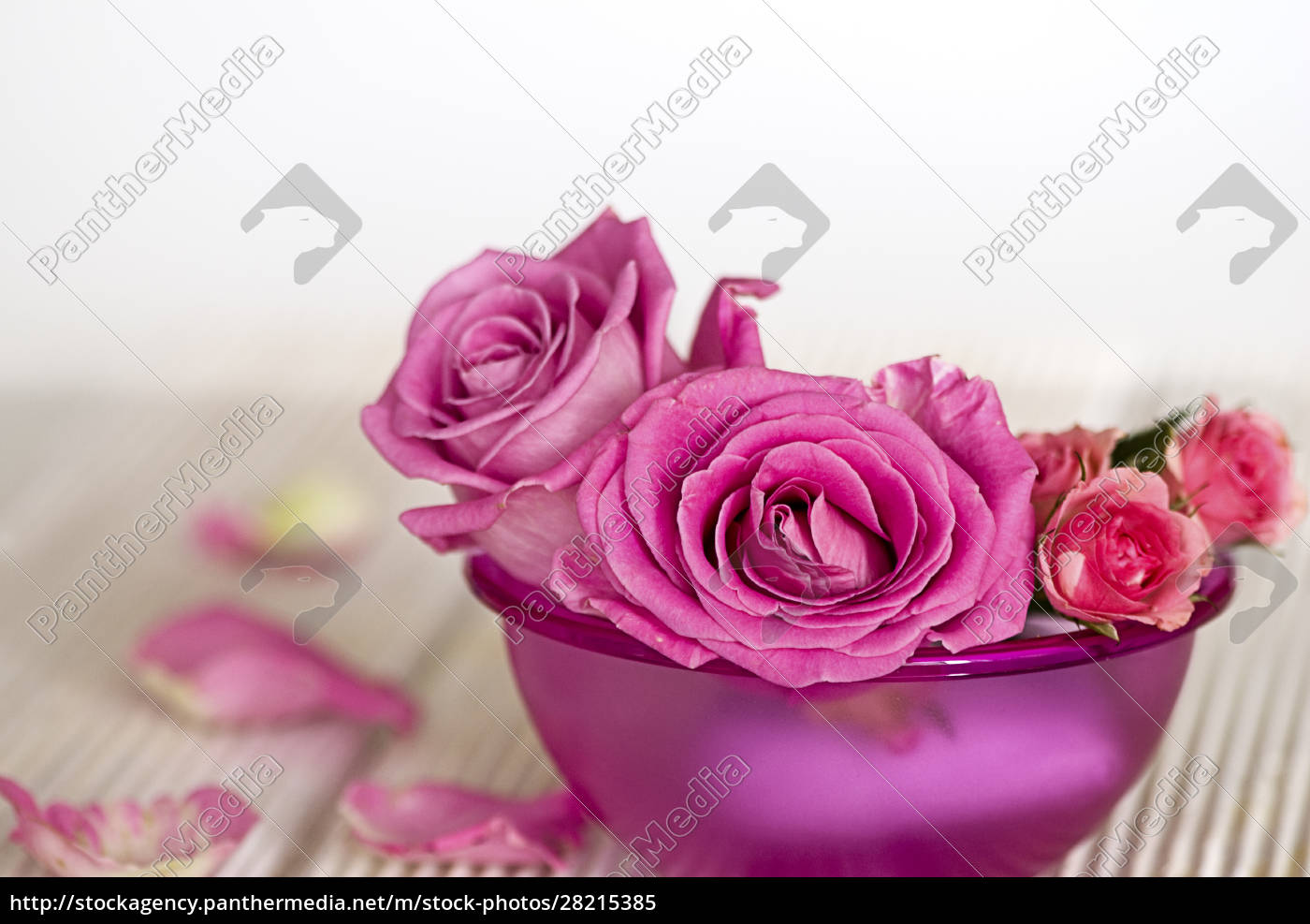 pink, roses, in, a, pink, bowl - 28215385