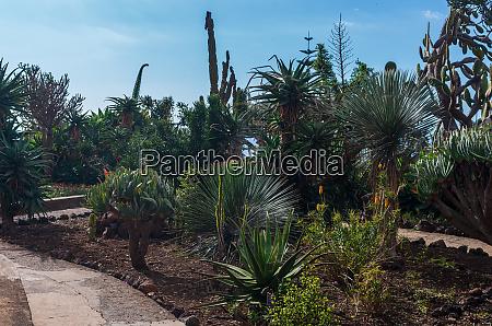 tropical, botanical, garden, in, funchal, city - 28215415