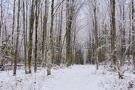 wintertime, landscape, of, snowy, deciduous, stand - 28216208