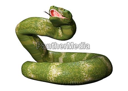 3d, rendering, viper, snake, on, white - 28217972