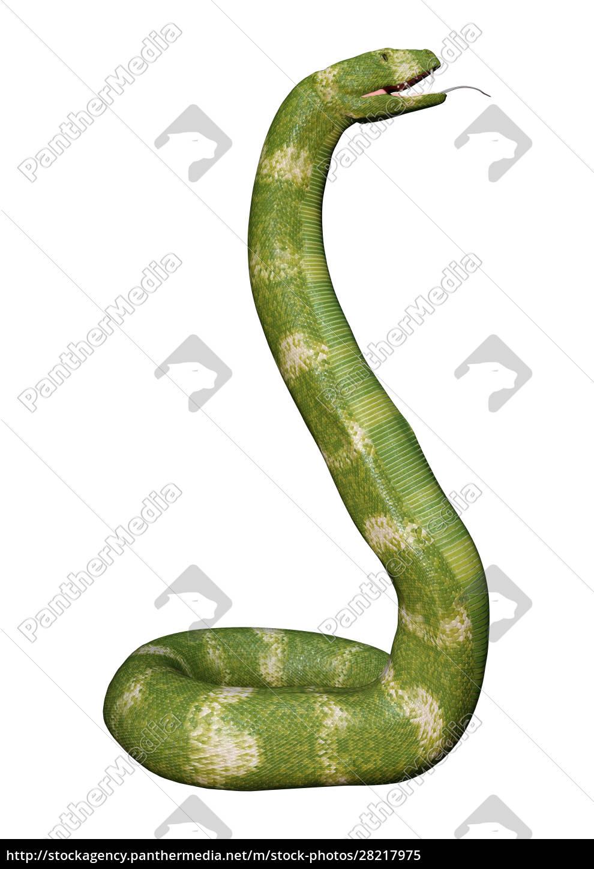 3d, rendering, viper, snake, on, white - 28217975