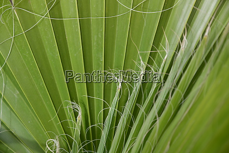 palm, leaves, in, the, province, of - 28217236