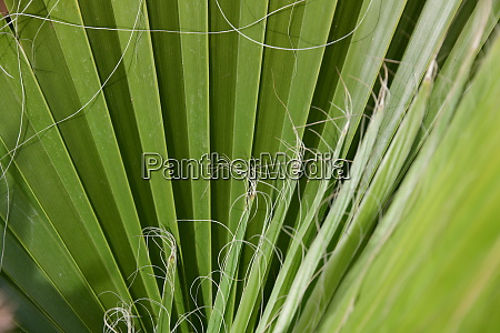 palm, leaves, in, the, province, of - 28217277
