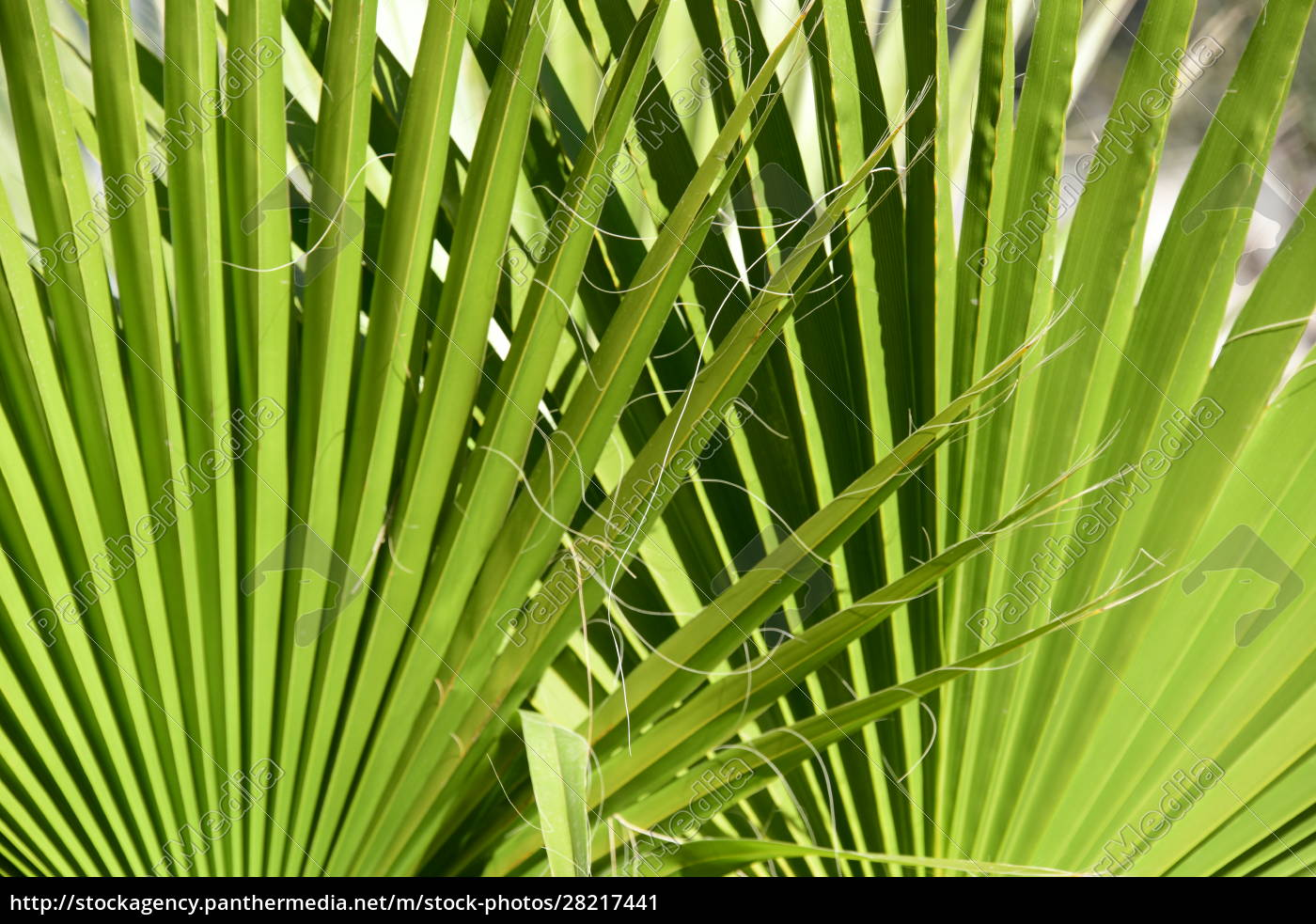 palm, leaves, in, the, province, of - 28217441