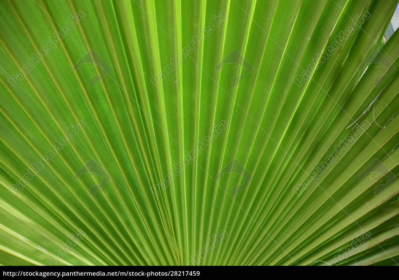 palm, leaves, in, the, province, of - 28217459