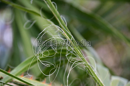 palm, leaves, in, the, province, of - 28217597