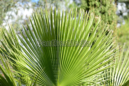 palm, leaves, in, the, province, of - 28217685