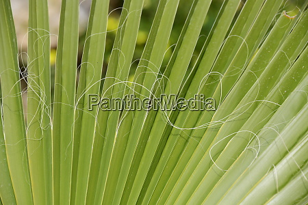 palm, leaves, in, the, province, of - 28217926