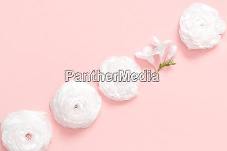 cream, ranunculus, flowers, on, a, light - 28218400