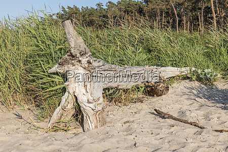 old, tree, trunk, lies, on, a - 28218223