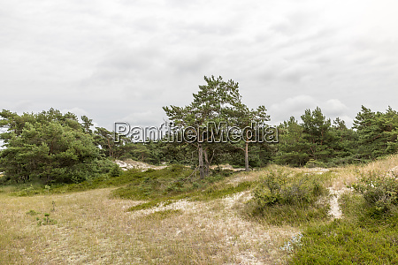 pine, tree, stands, on, a, reed - 28218162