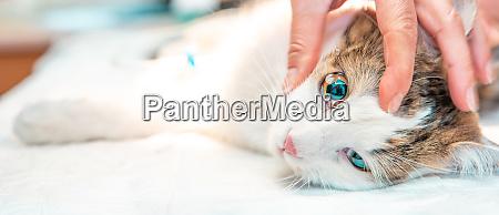 cat eye examination drip drug into
