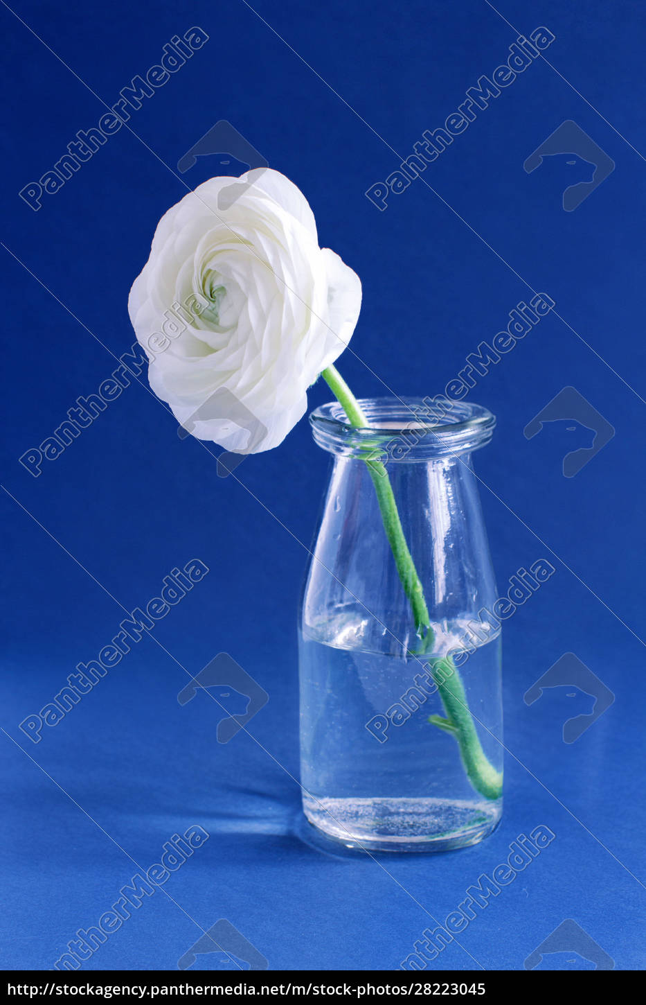 spring, composition, with, a, white, flower - 28223045