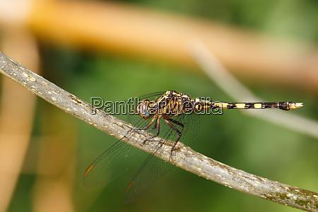 dragonfly in rainforest madagascar wildlife