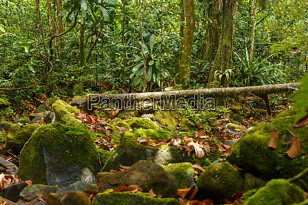 primary rainforest jungle madagascar